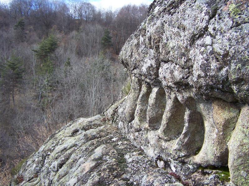 Roche dentee